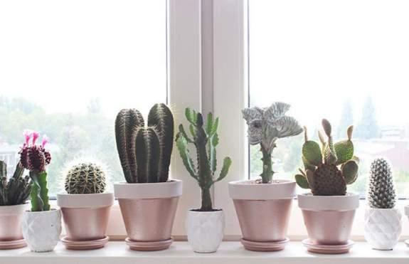 5-opções-de-plantas-para-decoração-do-seu-apartamento-Brascon-02