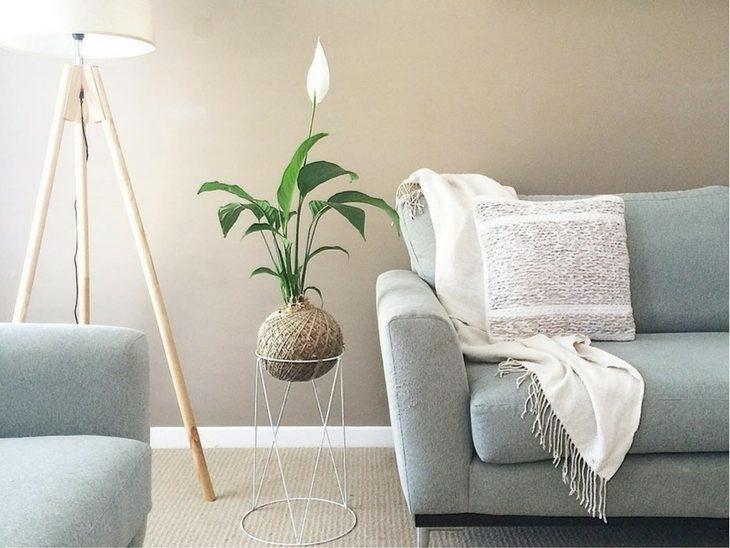 5-opções-de-plantas-para-decoração-do-seu-apartamento-Brascon-03