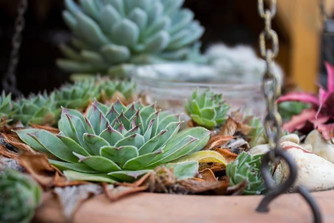 5 opções de plantas para decoração do seu apartamento-Brascon-06