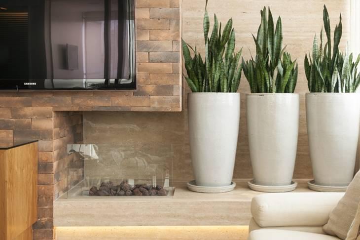 5-opções-de-plantas-para-decoração-do-seu-apartamento-Brascon